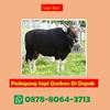 WA 0878-8064-3713, Lokasi Pedagang ...